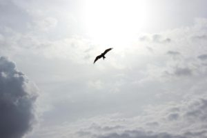 The silhouette of a bird against a cloudy sky.